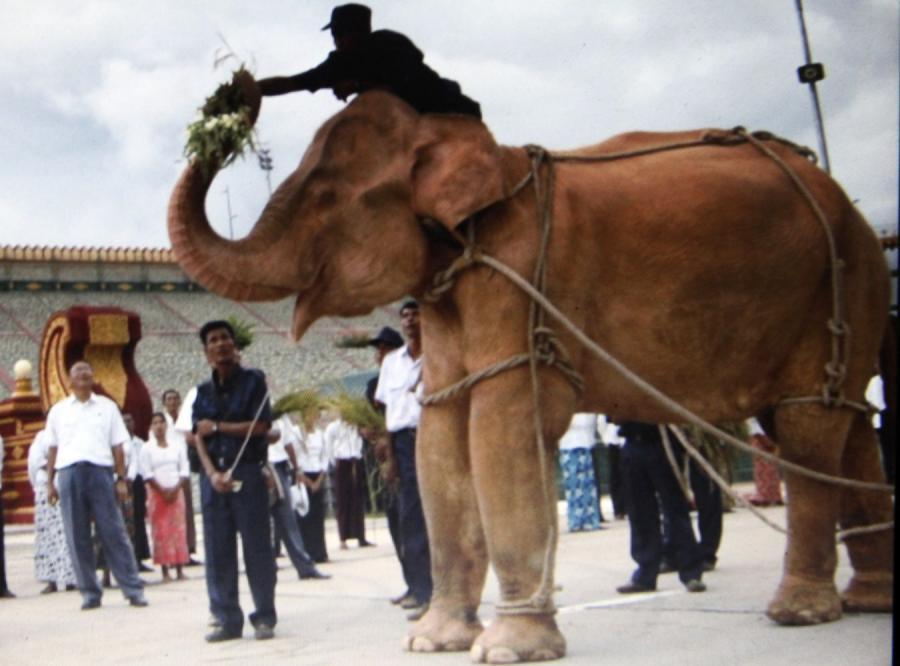 Wojskowy reżim urządził fetę na cześć słonia