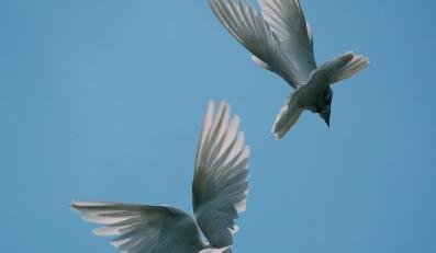 Deszcz martwych ptaków przeraził mieszkańców Włoch