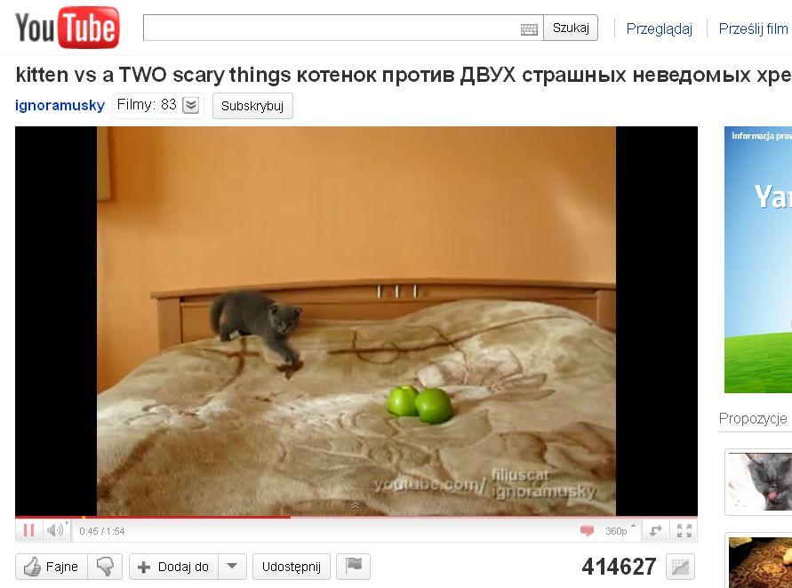 Dramatyczny kociak i dwa jabłka