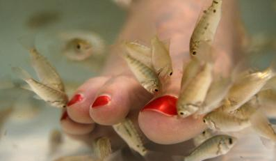 Podczas zabiegu fish pedicure można zarazić się HIV i HCV