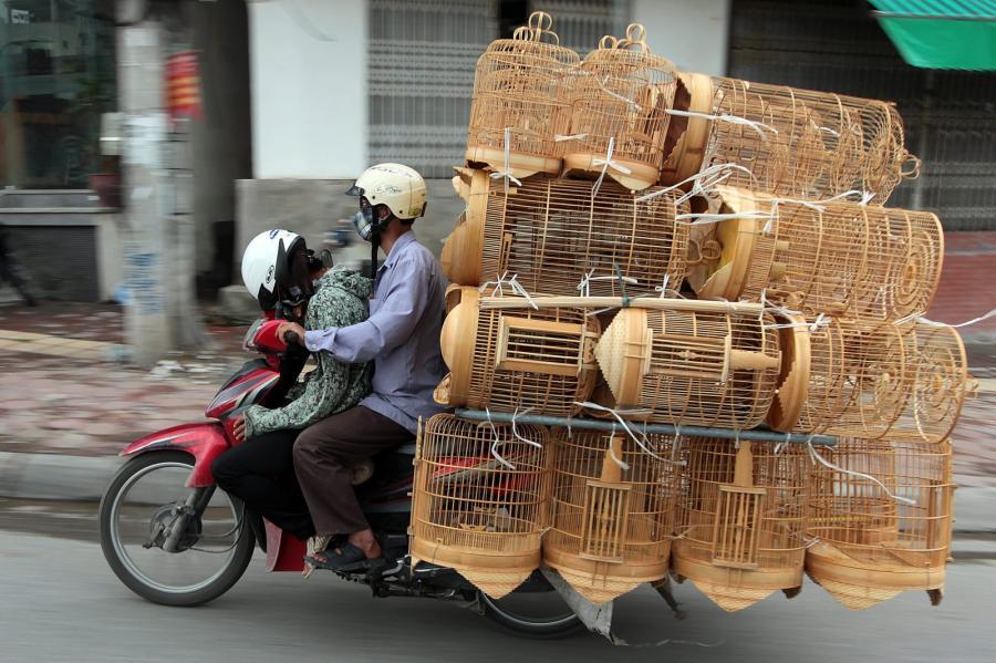 Wietnamski motocyklista wiezie klatki dla ptaków