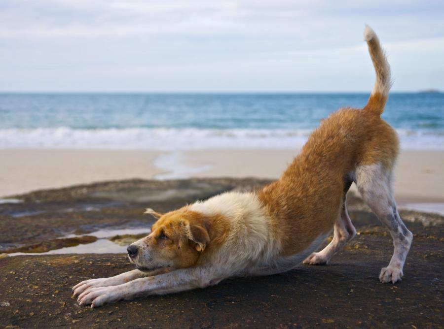 Bezdomne psy i koty