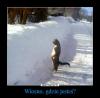 Internet przegania zimę dowcipem