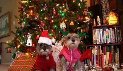 Twój pies może nie przeżyć świąt