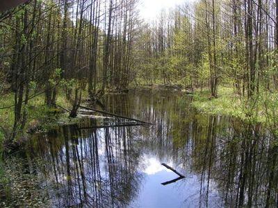 Lasy w nadleśnictwie Miłomłyn, źródło: milomlyn.olsztyn.lasy.gov.pl
