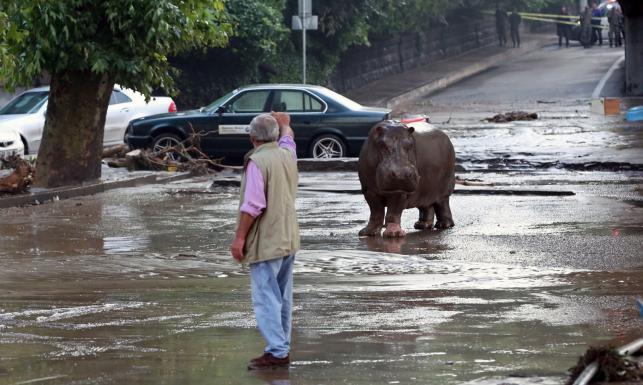 Tragiczna powódź w Tbilisi. Dzikie zwiętrzęta z zalanego zoo zagrażały mieszkańcom. ZDJĘCIA
