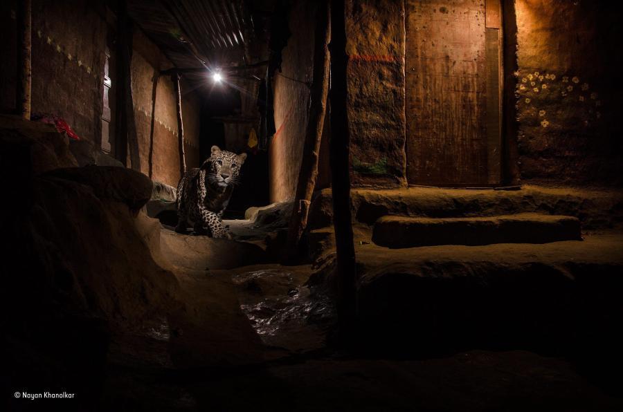 """KONKURS """"WILDLIFE PHOTOGRAPHER OF THE YEAR"""". NIESAMOWITE ZDJĘCIA ZWYCIĘZCÓW"""